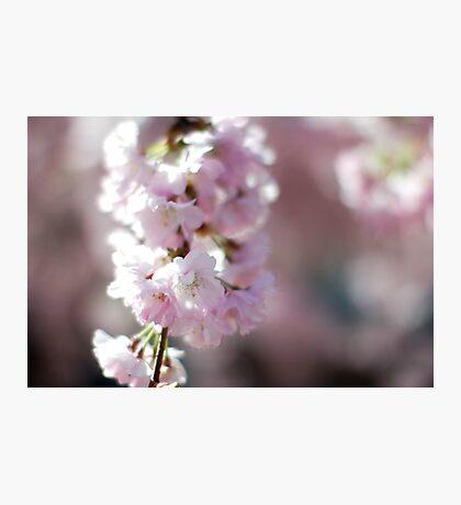 Blossom Photographic Print
