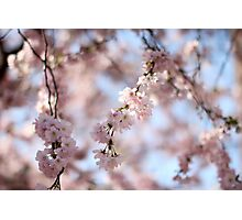 Blossom 4 Photographic Print