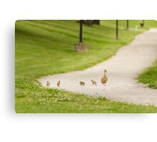 Spring time chicks with mommy Canvas Print