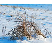 Cold Indifference Photographic Print