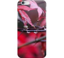 Acer tree iPhone Case/Skin