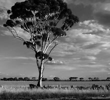 Welcome to the Outback. by Katherine Johns