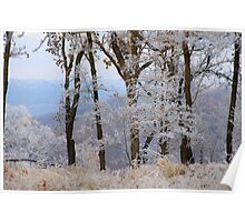 Winter Dreams, most winters I dream of spring Poster