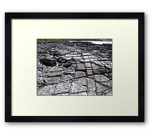Making Tracks # 1 Framed Print