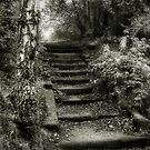 Steps by Ann Garrett
