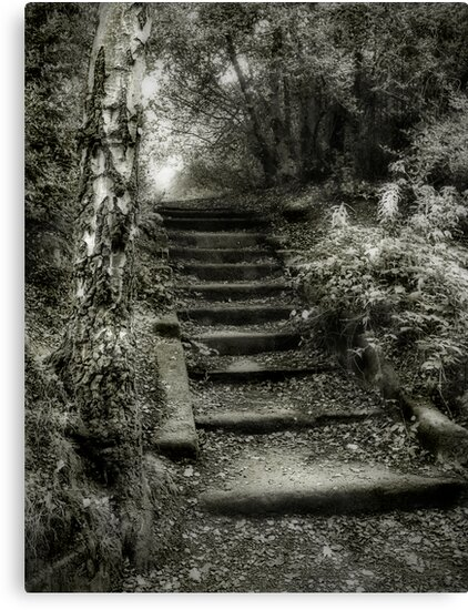 Steps by Ann Garrett