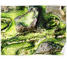 rocks and algae collusion Poster
