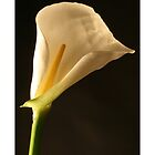 Calla Lilly by Ashleigh Helen Thomson