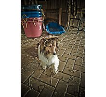 Lassie Photographic Print
