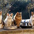 Cats Tip #1 : Wait near your plate, soon or later you will get food by Fran0723