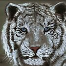 White Tiger by Dawn B Davies-McIninch