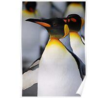 Walking Penguins Poster