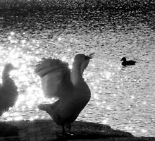 Goose Flap by Rachel Lilly