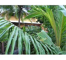 Jamaica Palms Photographic Print