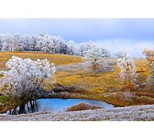 Winter Trees, Brannon Mt. NW Arkansas, USA Photographic Print