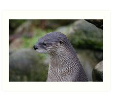 Portrait of an Otter Art Print