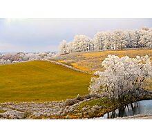 Golden Winter, Brannon Mt. NW Arkansas, USA Photographic Print