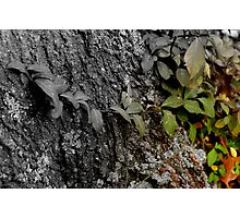 Fall To Winter Photographic Print