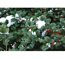 Snow in the Holly Photographic Print
