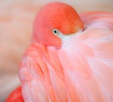 Pink Flamingo by Geoffrey