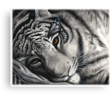 Lap of Luxury - Resting Tiger with Monarch Butterfly Wings Canvas Print