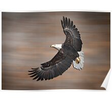 An Artistic Presentation Of The American Bald Eagle Poster
