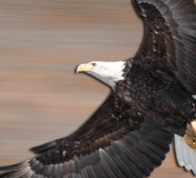 An Artistic Presentation Of The American Bald Eagle Sticker