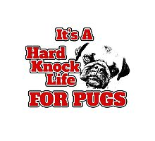 ITS A HARD KNOCK LIFE... FOR PUGS! Photographic Print