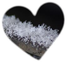 Snow Flake by Tanya Bowers