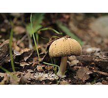 Mushroom Top Photographic Print