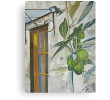 Olives in Chianti Canvas Print