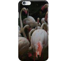 Flocking Flamingos  iPhone Case/Skin