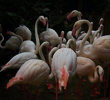 Flocking Flamingos  by Warney