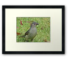 Look at me! Framed Print