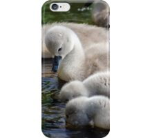 Cygnets 06 iPhone Case/Skin
