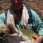 murray cod eildon by wildfish