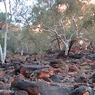 Creek Bed , King's Canyon, Watarrka NP, Northern Territory by Adrian Paul