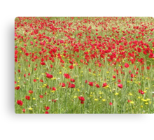 Meadow With Beautiful Bright Red Poppy Flowers Canvas Print