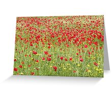 Meadow With Beautiful Bright Red Poppy Flowers Greeting Card