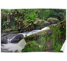 Mountain greenery- Keppels falls Poster