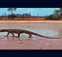 Perentie on the clay pan by Reddirt