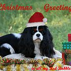 Christmas Card by Jenny Brice