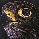 """""""Peregrine Falcon"""" - Oil Painting by Avril Brand"""