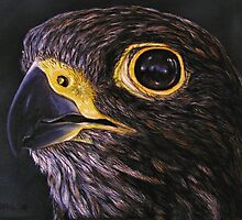 """Peregrine Falcon"" - Oil Painting by Avril Brand"