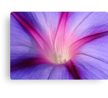 Lilac and Fuschia Morning Glory in Macro Canvas Print
