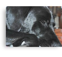 Sooo Tired... Canvas Print