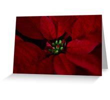 Bright Holiday Cheer Greeting Card