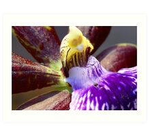 Purple orchid macro Art Print