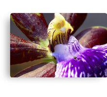 Purple orchid macro Canvas Print