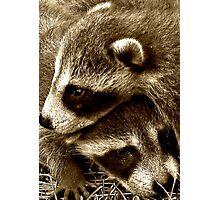Raccoon Cuddle Photographic Print